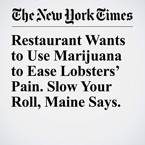Restaurant Wants to Use Marijuana to Ease Lobsters' Pain. Slow Your Roll, Maine Says. copertina