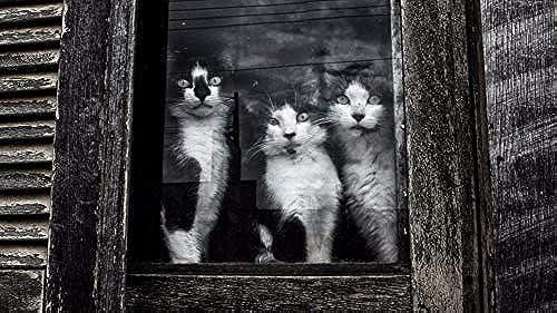 LIWeißY DIY maßen Nach Zahlen Kits,  em e, maßen Nach Zahlen Für Erwachsene Leinwand Home Decor, Katzen Sätzen Am Fenster, Mit Rahmen, 50x6cm