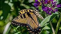 パズル500ピース大人のパズル木製ジグソーパズル昆虫蝶DIY現代美術家の装飾52X38CM