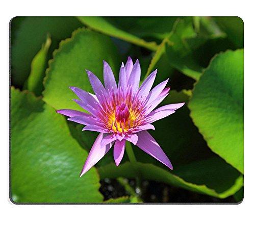 luxlady Naturkautschuk Gaming Mousepads Nymphaea Pflanze Blume Nahaufnahme Bild-ID 25866919