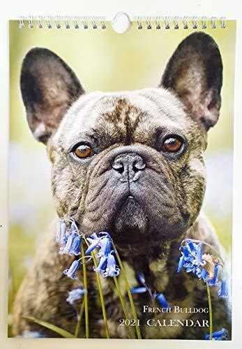 French Bulldog Wall Calendar 2021 Cute Dog A4 8'x11' New Sealed