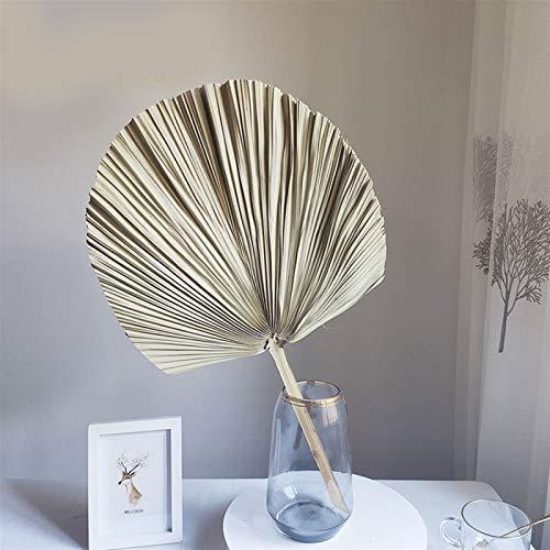 Natürliche getrocknete Blumen 1 stück naturgetrocknete blume palm blatt fan pflanze palme getrocknet baum blätter hause garten hochzeitsfeier wohnzimmer schlafzimmer tisch dekoration Hochzeitsfeier De