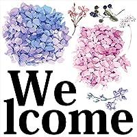 梅雨☆ シール式ウォールステッカー 飾り 60×60cm 雨 rainy day rainy season アジサイ 紫陽花 アジサイ 傘 雨 剥がせる カッティングシート wall sticker 雑貨 ガラス 窓 DIY wsl-016873-ws