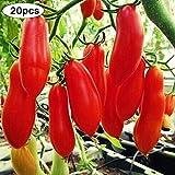 pittospwer 20Pcs Piante Bonsai di ortaggi biologici Non OGM da Giardino di Semi di Pomodoro Lunghi 20pcs