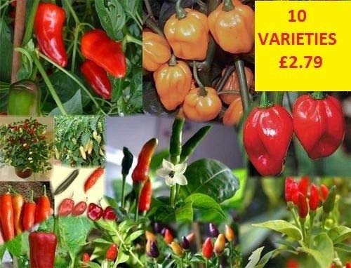 Portal Cool 10 Variety Chili-Samen-Sammlung 100 Samen Bhut Jolokia Naga Dorset Groß