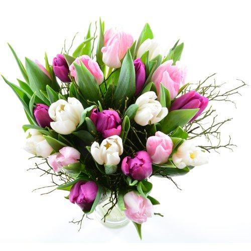 Blumenversand in den Frühling - 20 St. gemischte Tulpen in rosa, lila, weiß, mit Heidelbeergrün aufgebunden - mit Grußkarte Deutschlandweit versenden