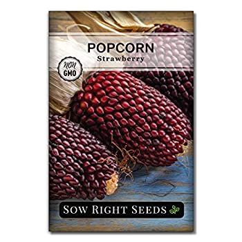 Sow Right Seeds - Strawberry Popcorn Seed for Planting - Non-GMO Heirloom Packet with Instructions to Plant a Home Vegetable Garden