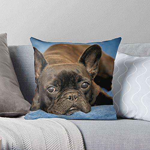 Animal Pet Dog Bulldog French Frenchie -Animal - Decorative Pillow Cases Home Decor Customize Polyester Pillowcase Double Side Printed Customize