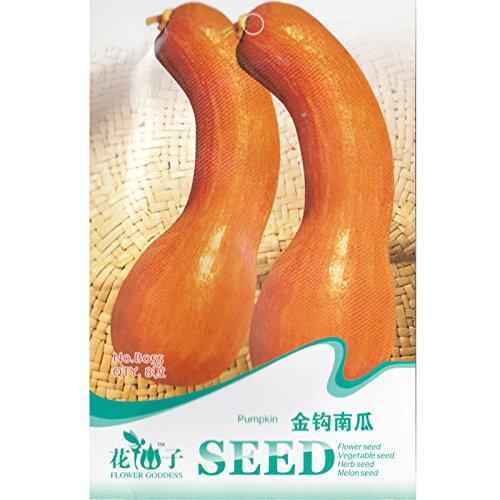Long Neck Squash Seed * 8 * Graines de citrouille * courge cou comme la courge musquée * Cucurbita moschata