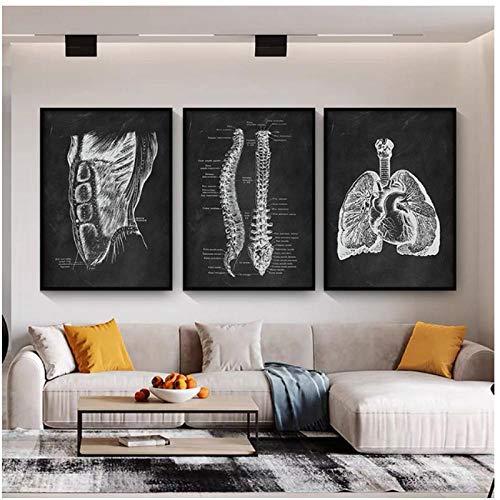 DLFALG Obra de anatomía humana Clínica médica Imagen de pared Órganos esqueléticos Sistema muscular Impresión de lienzo vintage Póster educativo del cuerpo-40x60cmx3 Sin marco