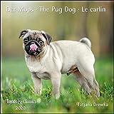 Der Mops The Pug Dog 2022 - Broschuerenkalender - Wandkalender - mit herausnehmbarem Poster