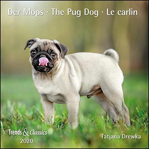 Der Mops The Pug Dog 2022 - Broschürenkalender - Wandkalender - mit Jahresplaner - Format 30 x 30 cm