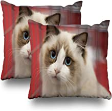 Kutita Set of 2 Decorative Pillow Covers 18 x 18 inch Throw Pillow Covers, A Collection of Animals Pictures with The Most Cute Cats Pattern Double-Sided Decorative Home Decor Pillowcase