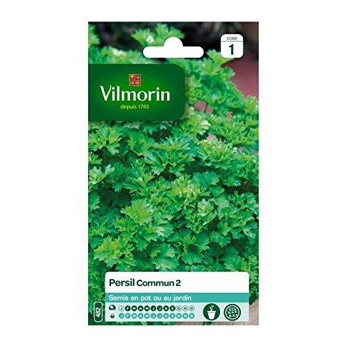 Vilmorin - Persil commun 2