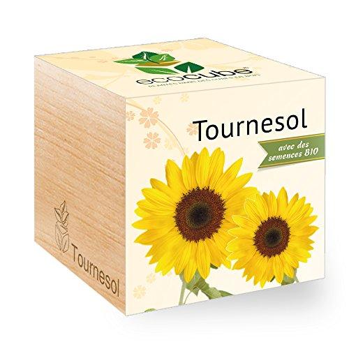 Feel Green Ecocube Tournesol Certifiées Bio, Idée Cadeau (100% Ecologique), Grow-Your--Own/Kit Prêt-à-Pousser, Plantes Dans Des Cubes En Bois 7.5cm, Produit En Autriche