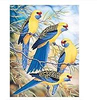 NC56 A 家の装飾アートのためのDIYデジタル絵画オイルペインティング子供と大人のためのデジタルDIYキャンバスオイルペイント美しい羽鳥40x50cm