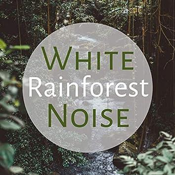 White Noise Rainforest - Entspannende Weißes Rauschen mit Tropische Naturgeräusche zum Loslassen