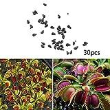 SummerRio semillas dionaea planta carnivora semilla, Fly Trap Jardín de Bonsai