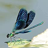 Pintura digital para adultos principiantes-pintura digital de libélula