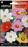 Semillas de Flores - Cosmos Sensación Flor Gigante variada - Batlle