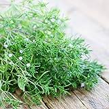 semi di piante salate estive 20 pezzi semi di vaniglia europei satureja hortensis biologici monarda didyma colibrì commestibile biologico tè alle erbe alla menta piante facili da coltivare semi