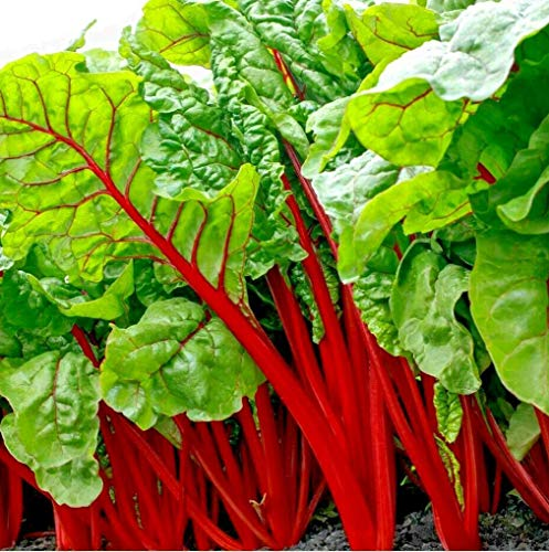 S-pone, 300+ Swiss Chard Rhubarb Seeds Vegetable Seeds for Planting Home Gardens...