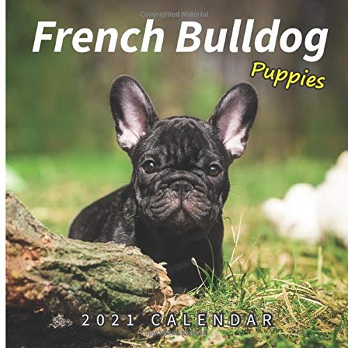 French Bulldog Puppies: 2021 Wall Calendar - Mini Calendar, 7'x7', 12 Months