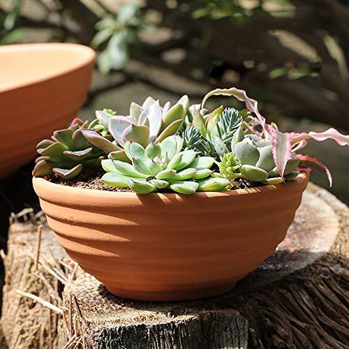 Rishx Terre Cuite Effet Plante Pots de Fleurs Poterie Rouge Flowerpot Intérieur Extérieur Planteur charnue Combinaison Usine Platter Porcelaine Vis Bol Rebord Planteur Jardinage Cadeaux