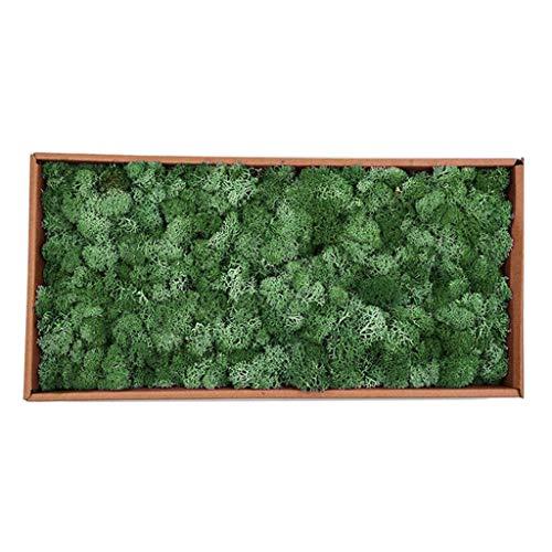 joyMerit Musgo De Reno Artificial Preservado para Terrarios Fairy Gardens Arts & Crafts 20 Colores - Verde Oscuro, Individual