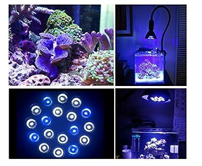 Dlpj LED Aquarium Lampfor Nano Réservoir Refugium Pico réservoirs d'eau fraîche, Marine Aquarium Tank, Algues Corail Croissance (Bleu et blanc)
