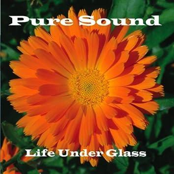 Life Under Glass