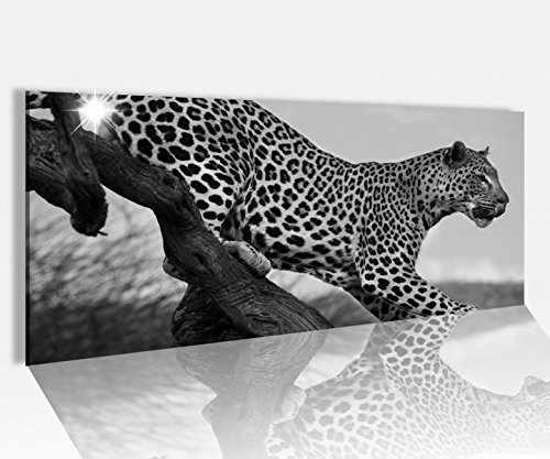 Cuadro Acrílico CRISTAL 100x40cm Leopardo Animal Árbol FELINO África Negro Blanco Imagen vidrio acrílico Cuadros de cristal acrílico 14a871-100cmx40cm
