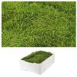1 Kiste Echtes Moos - Plattenmoos - Natur Dekomoos zum basteln in verschiedenen Sorten - DIY - Islandmoos, Plattenmoos, Bollenmoos, Hügelmoos Sphagnum Moos