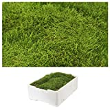 1 Caja Placa de Musgo aprox. 2,00-2,50 kg Colchón de musgo verde naturaleza