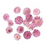 10pcs Gepresste Blumen Getrocknete Blühtenknöpfe zum Basteln - Helllila Blumen