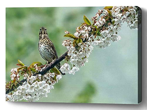 YUNLOY Canvas Wall Print Framed for Home Walls Decor Morden Decoration 20x14 Thrush Musician Nature Birds Wild Tree Leaves Green Bird Plumage