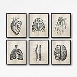DLFALG Anatomia Umana Scienza Poster Vintage Stampe d'Arte Anatomia Pittura su Tela Doctor Clinic Immagini da Parete Decor- 30x40cmx6 Senza Cornice
