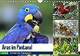 Aras im Pantanal (Wandkalender 2020 DIN A4 quer): Aras in ihrem natürlichen Lebensraum (Monatskalender, 14 Seiten ) (CALVENDO Tiere) - Yvonne und Michael Herzog
