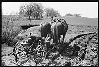 HistoricalFindings Photo: Jasper County,Iowa,IA,Farm Security Administration,FSA,Farm Life,2