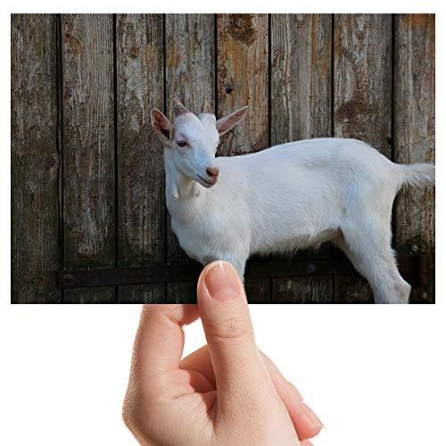 Foto con diseño de granja de cabra blanca de 6 x 4 pulgadas para regalo #8756