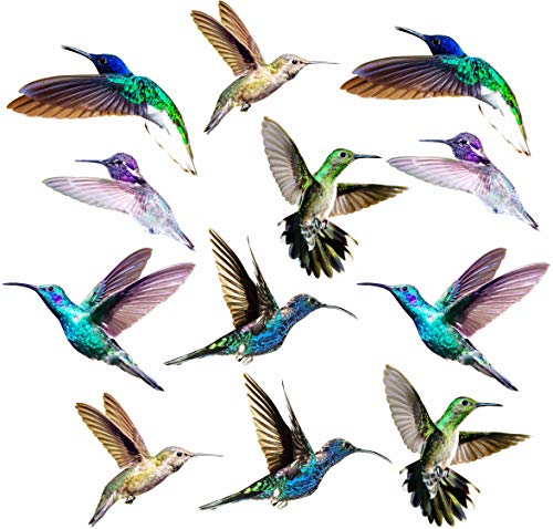 Hummingbird Window Clings - 12 x Anti Collision Decals to Prevent Bird Strikes on Doors & Windows - Static, UV Resistant & Non Adhesive Vinyl Cling - Deterrent Decal & Glass Decor to Alert Birds