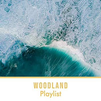 Looping Tranquil Woodland Playlist