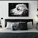 N / A Alpaka Tierfotografie Wandkunst Leinwanddrucke für Wohnzimmer Schwarz-Weiß-Tiere Leinwandbilder Nordische Wanddekoration 60x90 cm Kein Rahmen
