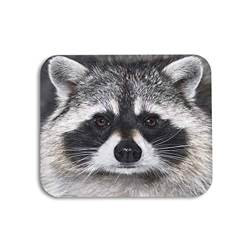 AOYEGO Raccoon Mouse Pad Cute Animal Face Grey Fur Black Eyes Mammal Gaming Mousepad Rubber Large Pad Non-Slip for Computer Laptop Office Work Desk 9.5x7.9 Inch