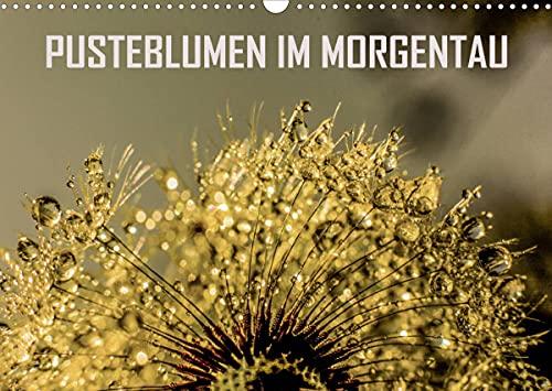 Pusteblumen im Morgentau (Wandkalender 2022 DIN A3 quer)