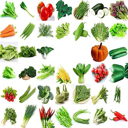 Semi di ortaggi biologici cinesi verdi da giardino...