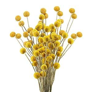HUAESIN 30pcs Ramo de Flores Secas Decoracion Pequeñas Bolas de Craspedia Secas Amarilla Flor Seca Natural para…