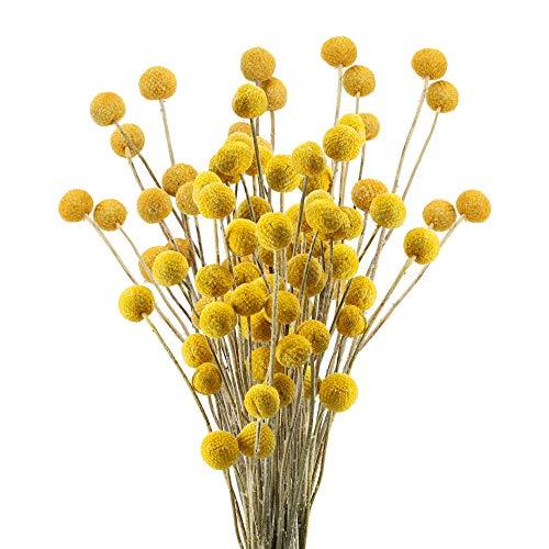HUAESIN 30pcs Getrocknete Blumen Echte Natürliche Künstliche Blumen Craspedia Globosa Kunstblumen Trockenblumen für Hochzeit Party Tischdeko Fotografie Requisiten Dekoration 40cm