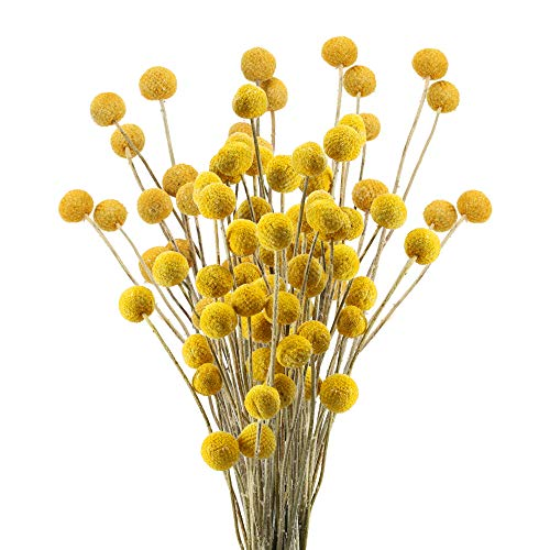 HUAESIN 30pcs Ramo de Flores Secas Decoracion Pequeñas Bolas de Craspedia Secas Amarilla Flor Seca...