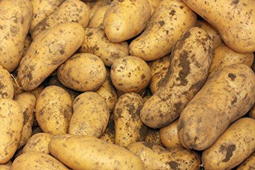 Speisekartoffeln Sorte: Anabel festkochend Ernte 2020 Pfalz 12,5 kg Sack
